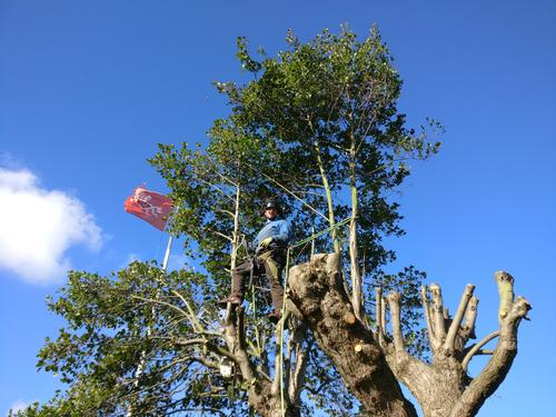 Ryan climbing a tree in the sunshine with a flag in the background.
